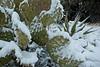 AZ-2011-011: Redington Pass, Pima County, AZ, USA