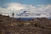 AZ-2011-055: Redington Pass, Pima County, AZ, USA