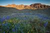 AZ-2010-088: , Pinal County, AZ, USA