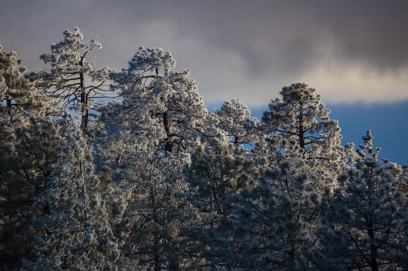 AZ-2013-030: Mount Lemmon, Pima County, AZ, USA