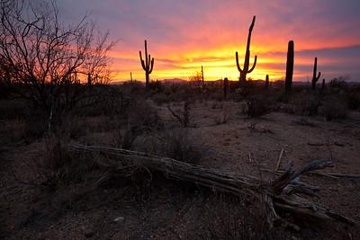 AZ-2010-012: Tucson, Pima County, AZ, USA