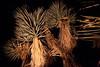 AZ-2009-080: Phoenix, Maricopa County, AZ, USA