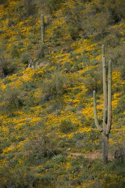 AZ-2008-003: Bartlett Lake Recreation Area, Maricopa County, AZ, USA