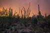 AZ-2012-036: Tucson, Pima County, AZ, USA