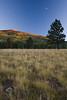 AZ-2008-057: Coconino National Forest, Coconino County, AZ, USA