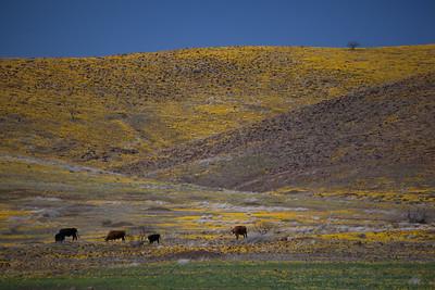 AZ-2012-001: San Bernardino Valley, Cochise County, AZ, USA