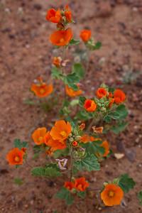 AZ-2010-059: Tohono O'Odham Indian Reservation, Pinal County, AZ, USA