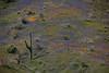 AZ-2010-049: , Pinal County, AZ, USA