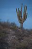 AZ-2010-001: , Cochise County, AZ, USA