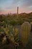 AZ-2008-016: Tucson, Pima County, AZ, USA