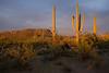 AZ-2008-011: Tucson, Pima County, AZ, USA