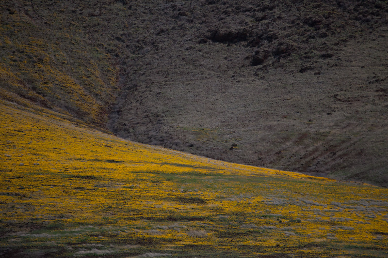 AZ-2012-003: San Bernardino Valley, Cochise County, AZ, USA