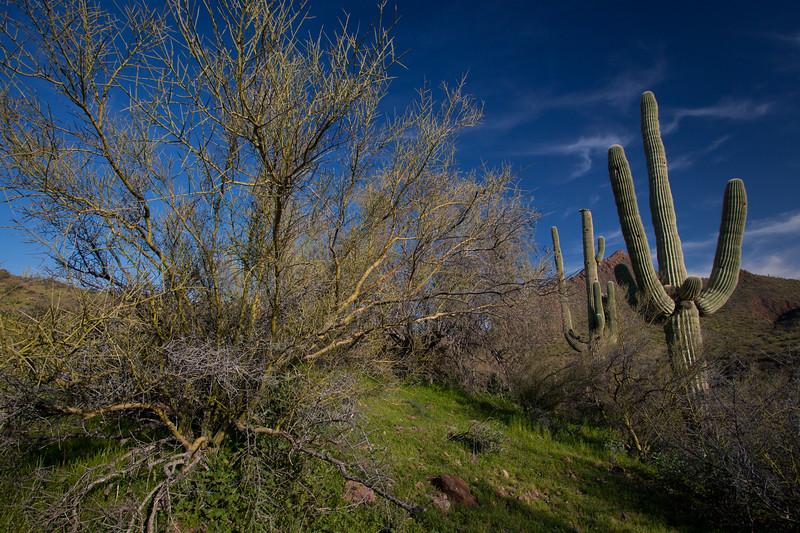 AZ-2010-041: , Yavapai County, AZ, USA