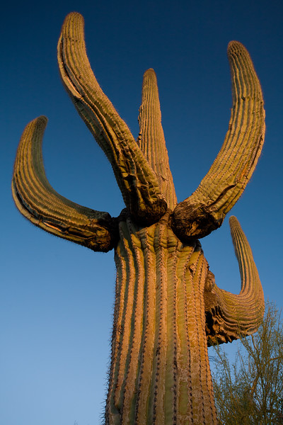 AZ-2007-039: Lost Dutchman State Park, Pinal County, AZ, USA