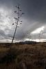 AZ-2009-017: , Santa Cruz County, AZ, USA