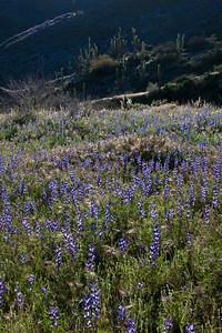 AZ-2010-071: Peachville Mountain, Pinal County, AZ, USA