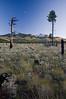 AZ-2008-056: Coconino National Forest, Coconino County, AZ, USA