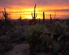 AZ-2010-010: Tucson, Pima County, AZ, USA