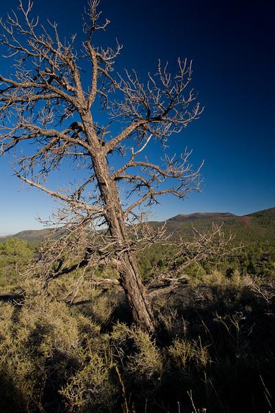 AZ-2008-051: Sunset Crater Volcano National Monument, Coconino County, AZ, USA