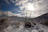 AZ-2011-050: Redington Pass, Pima County, AZ, USA