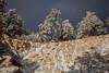 AZ-2013-026: Mount Lemmon, Pima County, AZ, USA