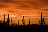 AZ-2008-018: Tucson, Pima County, AZ, USA