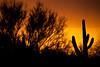 AZ-2011-067: Tucson, Pima County, AZ, USA