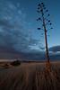 AZ-2009-020: , Santa Cruz County, AZ, USA