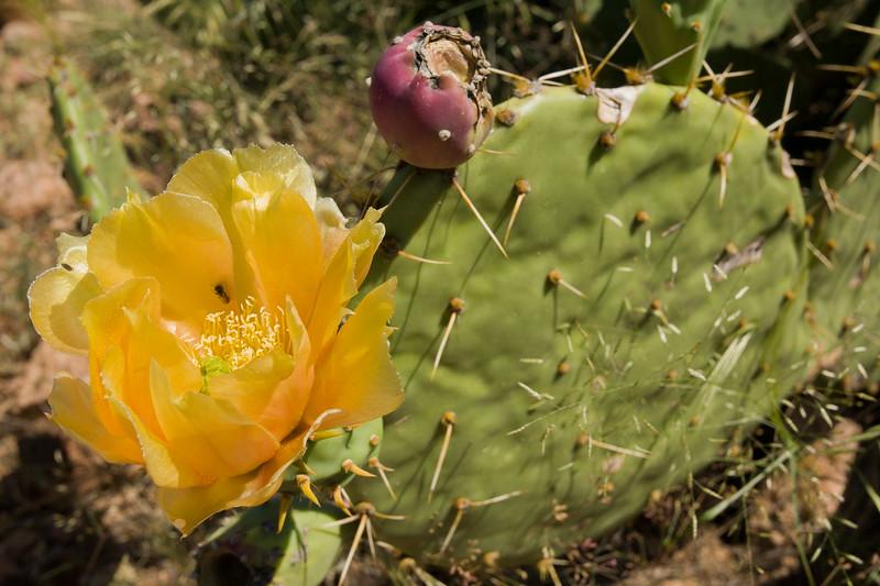AZ-2007-064: , Pima County, AZ, USA