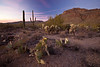 AZ-2010-136: Tucson, Pima County, AZ, USA
