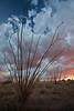 AZ-2010-128: , Cochise County, AZ, USA