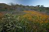 AZ-2010-078: Peachville Mountain, Pinal County, AZ, USA