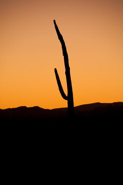 AZ-2009-002: Tohono O'Odham Indian Reservation, Pima County, AZ, USA