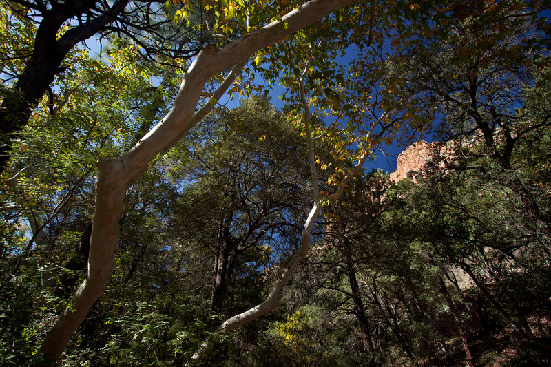 AZ-2009-049: , Cochise County, AZ, USA