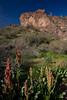 AZ-2010-037: , Yavapai County, AZ, USA