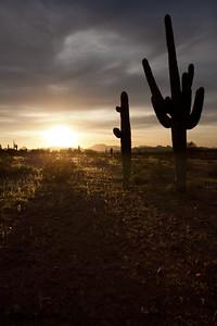 AZ-2010-060: Tohono O'Odham Indian Reservation, Pinal County, AZ, USA