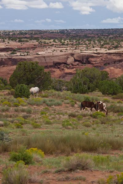AZ-2010-111: Canyon de Chelly National Monument, Apache County, AZ, USA
