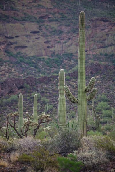 AZ-2013-045: Organ Pipe Cactus National Monument, Pima County, AZ, USA