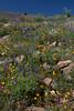 AZ-2010-050: , Pinal County, AZ, USA