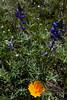 AZ-2010-048: , Pinal County, AZ, USA