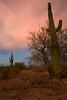 AZ-2008-047: Tohono O'Odham Indian Reservation, Pinal County, AZ, USA
