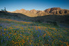 AZ-2010-086: , Pinal County, AZ, USA