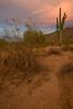 AZ-2008-042: Tohono O'Odham Indian Reservation, Pinal County, AZ, USA
