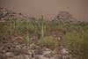 AZ-2013-053: Sacaton Mountains, Pinal County, AZ, USA