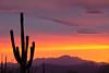 AZ-2010-015: Tucson, Pima County, AZ, USA