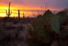 AZ-2010-011: Tucson, Pima County, AZ, USA
