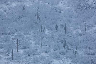AZ-2011-019: Redington Pass, Pima County, AZ, USA