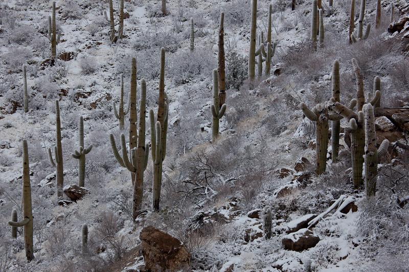 AZ-2011-026: Redington Pass, Pima County, AZ, USA