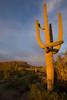 AZ-2008-013: Tucson, Pima County, AZ, USA