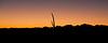AZ-2009-003: Tohono O'Odham Indian Reservation, Pima County, AZ, USA